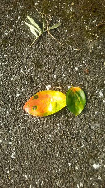 今日も秋見つけました♥